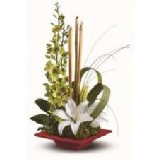 Orchid Sympathy